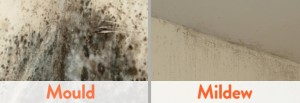 Get rid of mold & mildew on the walls with vinegar and baking soda
