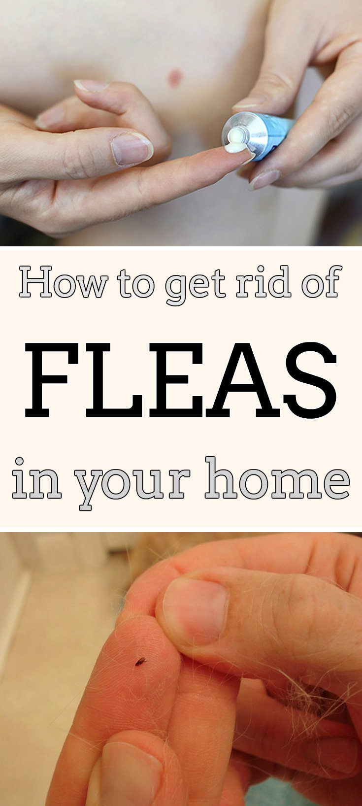 how do i get rid of fleas