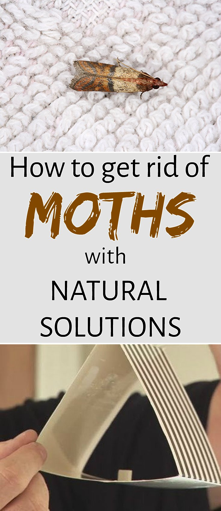 how to get rid of moths with natural solutions