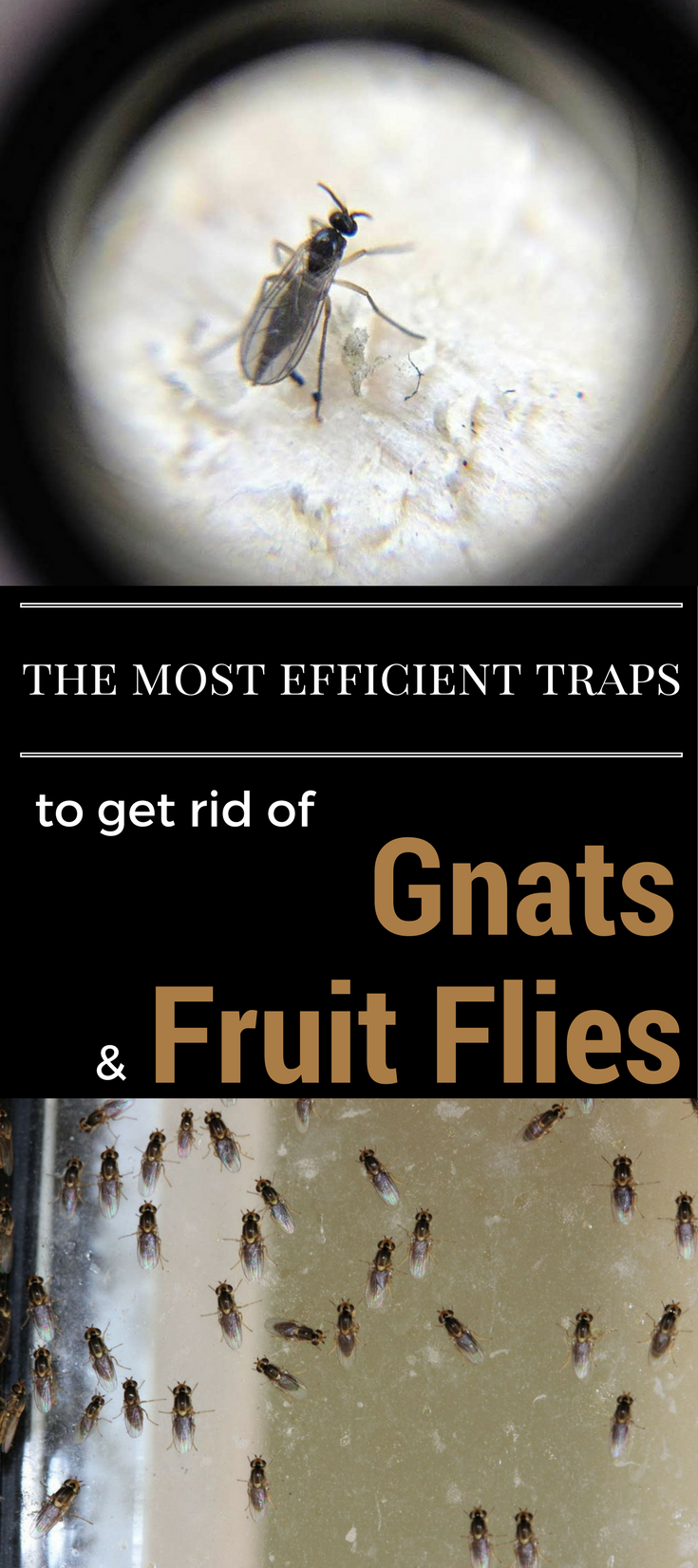 The Most Efficient Traps To Get Rid Of Gnats And Fruit