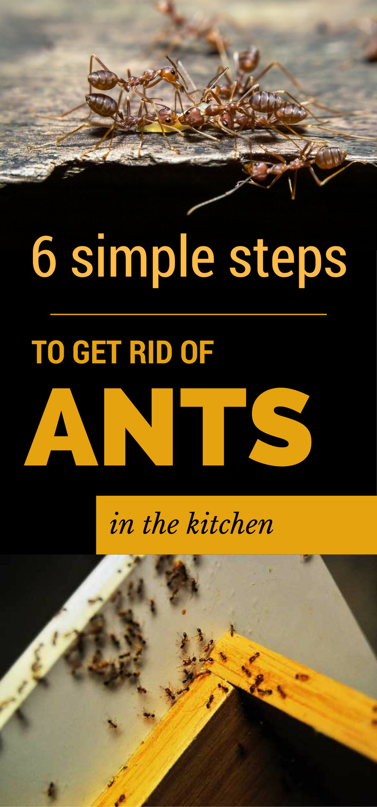 6 Simple Steps to Get Rid of Ants in The Kitchen ...