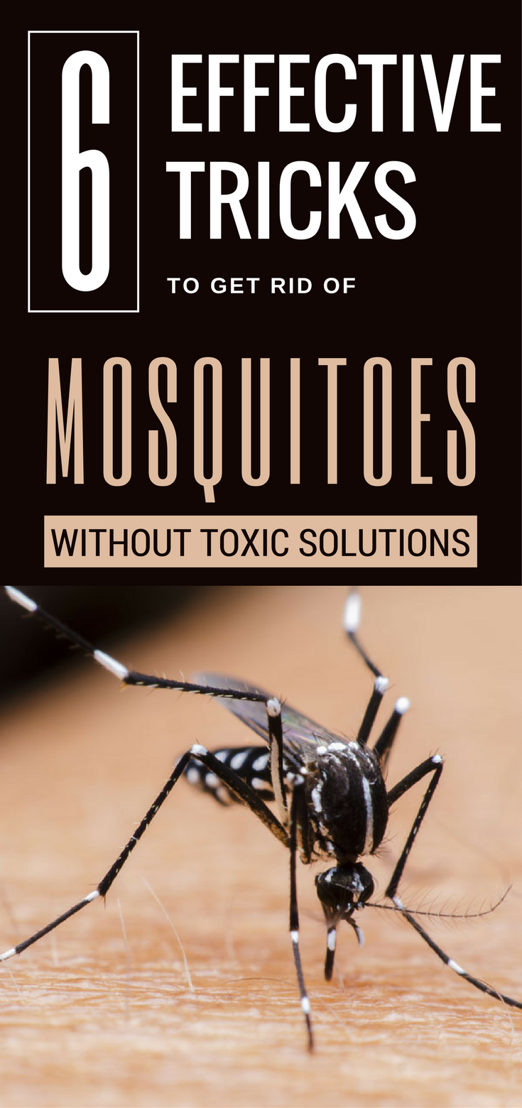 6 effective tricks to get rid of mosquitoes without toxic Ways to get rid of mosquitoes in your house