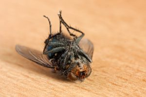 17 Natural Solutions To Get Rid Of Flies
