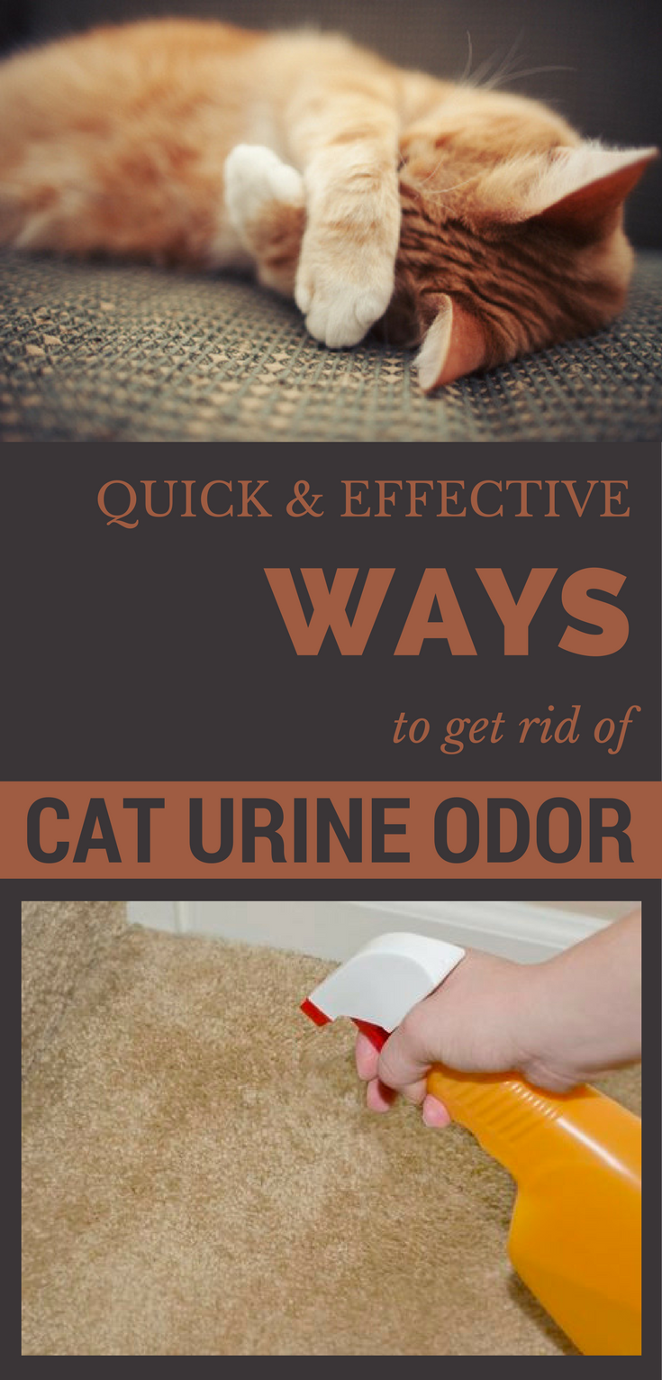 how to get weed out of your urine quickly
