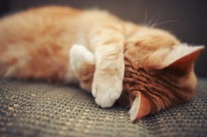 Does The Cat Urine Odor Give You A Headache? Check Out These Effective Ways To Get Rid Of It