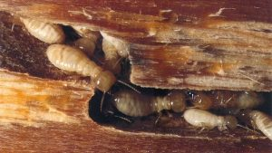 4 Tips For Protecting Your House Against Termites And How To Avoid Infestation