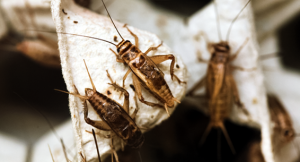 Super Easy Ways To Get Rid Of Crickets From Your House