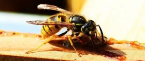 8 Effective Ways To Get Rid Of Wasps