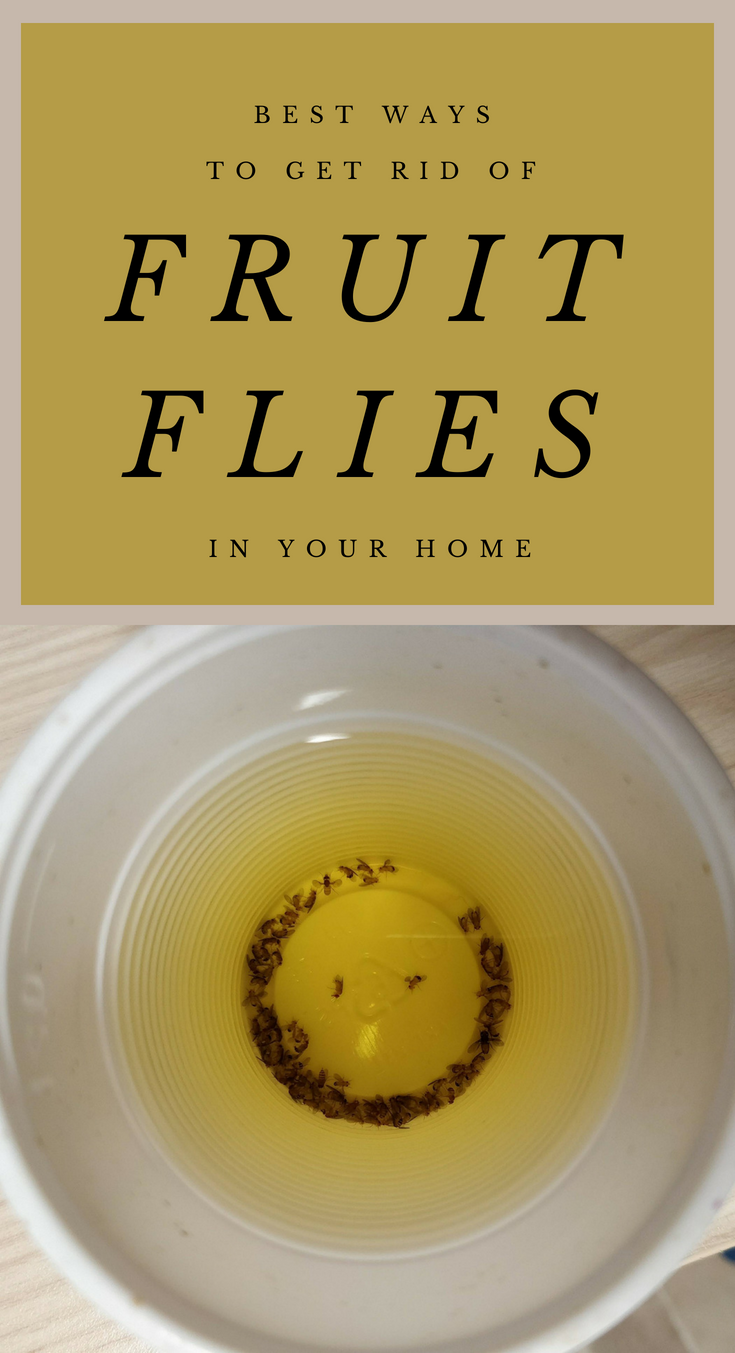 best ways to get rid of fruit flies in your home. Black Bedroom Furniture Sets. Home Design Ideas