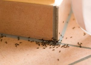 Natural Methods To Get Rid Of Ants In Your House
