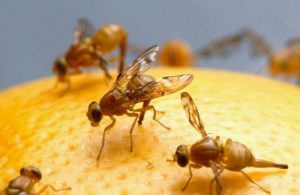 Best Ways To Get Rid Of Fruit Flies In Your Home