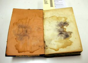 Book Specialist Advice: How To Safely Remove Mold And Mildew From Old Books Without Damaging Them